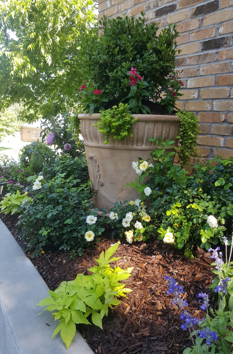 5 Easy Care Plants For Brown Thumbed Gardeners